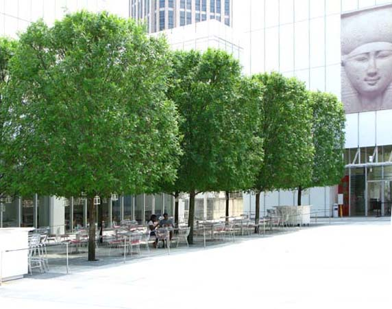 Clipped Trees in the Piazza Bosco | Woodruff Arts Center Site Design